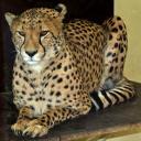 2013-09-25-gepard.jpg