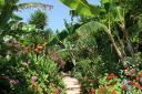 panoramanotosbeachbush.jpg