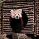 2015-10-28-panda1.jpg